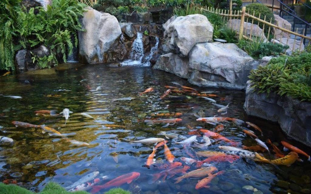 designing indoor koi aquarium